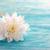 fiore · bianco · legno · copia · spazio · primavera · sfondo - foto d'archivio © Nelosa