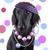 the lady dog stock photo © nelosa