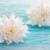 fiore · fiori · bianchi · copia · spazio · primavera · legno · sfondo - foto d'archivio © Nelosa