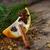 natal · ramo · canela · secas · laranja - foto stock © nelosa