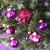 árvore · de · natal · rosa · quartzo · flocos · de · neve - foto stock © nelosa