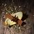 karácsonyi · étel · dekoráció · narancs · fahéj · csillámlás · fenyő - stock fotó © nelosa