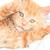 playful kitten stock photo © nelsonart