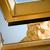 кошки · имбирь · открытых · окна · лице - Сток-фото © nelsonart