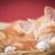 眠い · 子猫 · 愛らしい · 生姜 · バスケット - ストックフォト © nelsonart