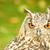 bengal eagle owl stock photo © nelsonart