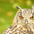 coruja · retrato · laranja · olhos · ouvido - foto stock © nelsonart