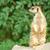 meerkat stock photo © nelsonart