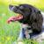 verspielt · Tennisball · Spiel · Hund · glücklich · grünen - stock foto © nelsonart