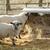 birka · űr · szöveg · állat · magányos · mezőgazdaság - stock fotó © nelsonart