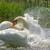 zuidelijk · mus · veren · vogel · bad · water - stockfoto © nelsonart