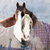 winter horses stock photo © nelsonart