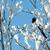 雪 · カバー · ツリー · 冬 · 自然 - ストックフォト © nelsonart