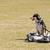 perro · correa · propietario · parque · campo · perros - foto stock © nelsonart