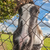 ló · mögött · kerítés · naplemente · étel · tájkép - stock fotó © nelsonart