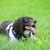 テニスボール · ゲーム · 犬 · 幸せ · 緑 - ストックフォト © nelsonart