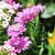 bella · fiori · giardino · fiore · natura · bellezza - foto d'archivio © nenovbrothers