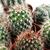 cacto · natureza · verde · dor · proteção - foto stock © nenovbrothers