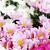 花 · 花 · 春 · 幸せ · 自然 · 光 - ストックフォト © nenovbrothers