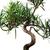 bonsai · cultura · albero · pot · bianco · foresta - foto d'archivio © nenovbrothers