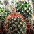 кактус · хвоя · природы · зеленый · более · защиту - Сток-фото © nenovbrothers