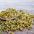 подготовка · ромашка · чай · высушите · цветы · изолированный - Сток-фото © nessokv