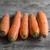свежие · зрелый · морковь · изолированный · белый · продовольствие - Сток-фото © nessokv