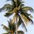 Palms on the Beach stock photo © newt96