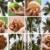 тропические · различный · стороны · природы · путешествия · праздник - Сток-фото © newt96