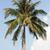 Palm · экзотический · назначение · отдыха · небе · облака - Сток-фото © newt96