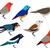 conjunto · diferente · aves · criança · arte · azul - foto stock © nezezon