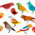 conjunto · diferente · aves · comunicação · rede - foto stock © nezezon