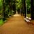 green lawn in city park stock photo © nezezon