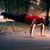 borst · training · bank · druk · volwassen · man · gymnasium - stockfoto © nicoletaionescu