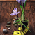 paars · krokus · voorjaar · gras · oranje - stockfoto © nikolaydonetsk