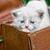 gatitos · jugando · hierba · ojo · verde - foto stock © nikolaydonetsk