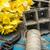 kert · virágcserép · tavasz · citromsárga · nárcisz · ajándék - stock fotó © nikolaydonetsk