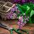 茂み · ライラック · 香ばしい · はさみ · 木製のテーブル · 花 - ストックフォト © nikolaydonetsk