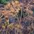 желтый · забор · трава - Сток-фото © nikolaydonetsk