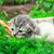 белый · котенка · корзины · улыбка · глаза · кошки - Сток-фото © nikolaydonetsk