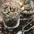 чай · фон · высушите · продовольствие · природы · зеленый - Сток-фото © nikolaydonetsk