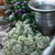 kruid · blad · hout · witte · gezonde - stockfoto © nikolaydonetsk