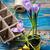 paars · Geel · krokus · tuin · bloem · blad - stockfoto © nikolaydonetsk