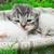 újszülött · kiscicák · kiscica · fehér · szín · macska - stock fotó © nikolaydonetsk