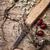 raízes · branco · fundo · doce · saudável · erva - foto stock © nikolaydonetsk