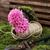 florescimento · flor · jacinto · pote · decorado · musgo - foto stock © nikolaydonetsk