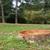 orman · vadi · ağaç · ahşap · çalışmak - stok fotoğraf © nirodesign