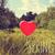 farbenreich · Frühling · Zeichen · weiß · Reflexion · Design - stock foto © nito