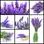 virág · közelkép · cseppentő · üveg · egészség · háttér - stock fotó © nito