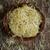 di · recente · ravanello · semi · nutriente · completo · vitamina · c - foto d'archivio © nito